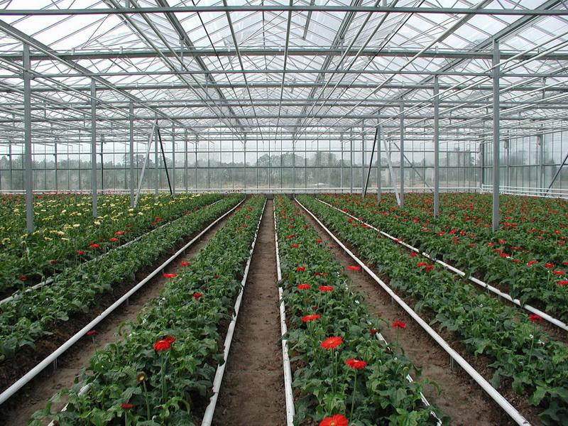 Строительство теплицы для выращивание 46