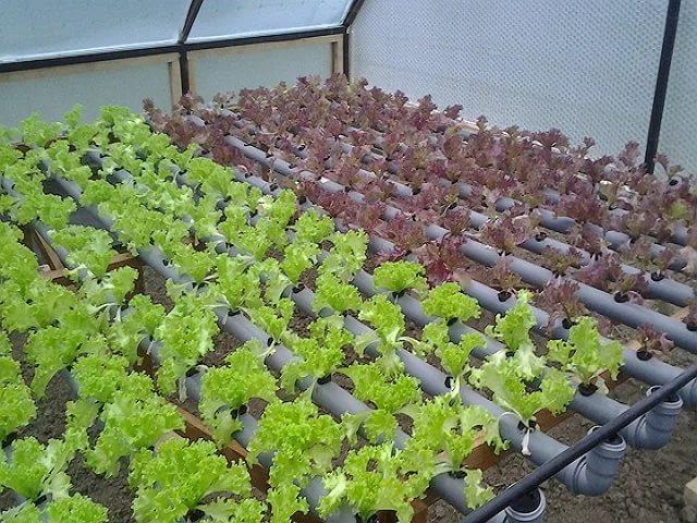 Салат – кладезь витаминов и полезных микроэлементов, которые так необходимы нашему организму в зимний период.